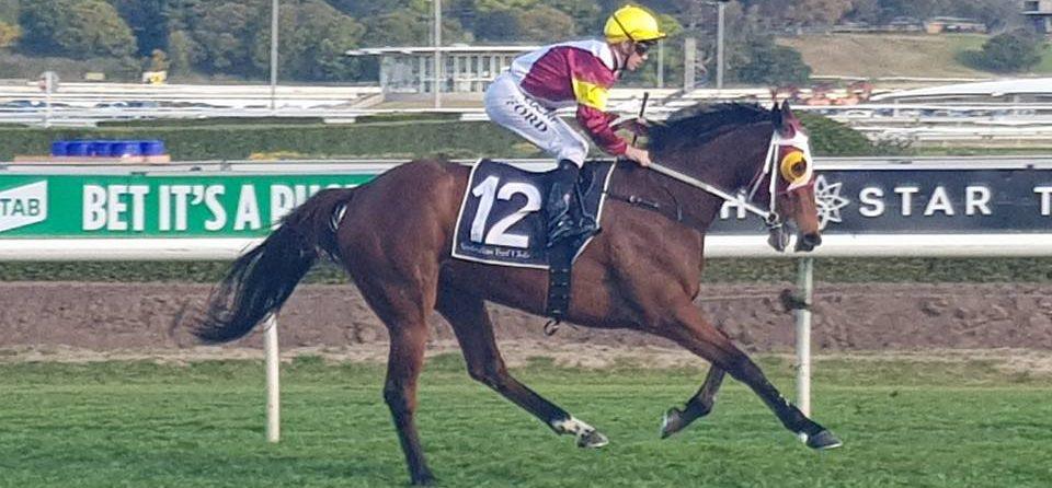 Horse Racing Life