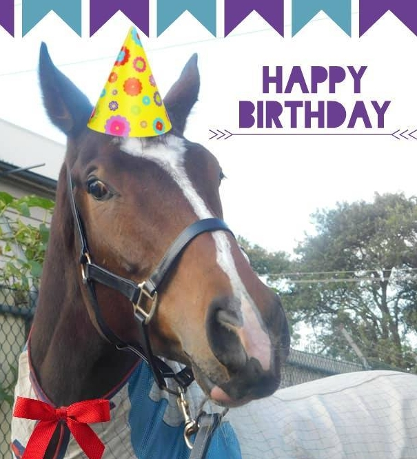 Happy Horses Birthday Horse Racing Life